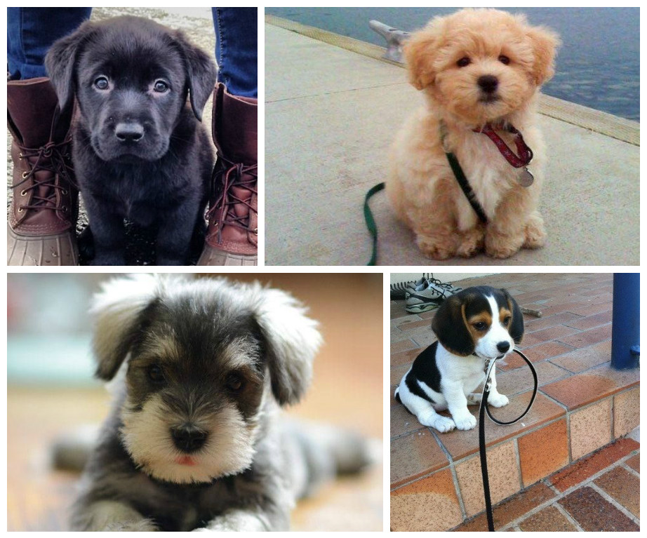 Lots of cute dogs